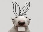 Bull terrier conquista fãs no Instagram